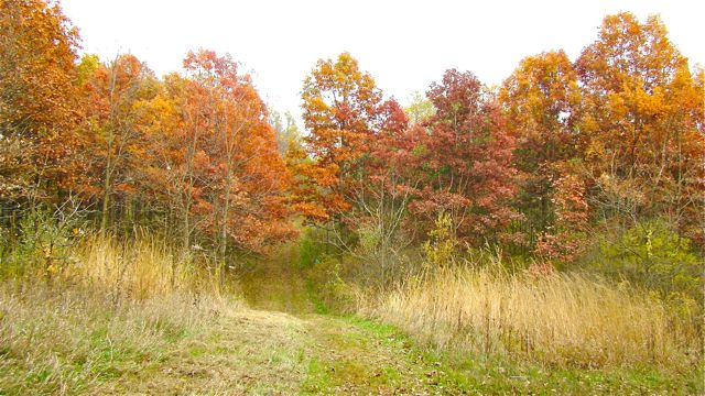 Fiery fall foliage natural midwest garden